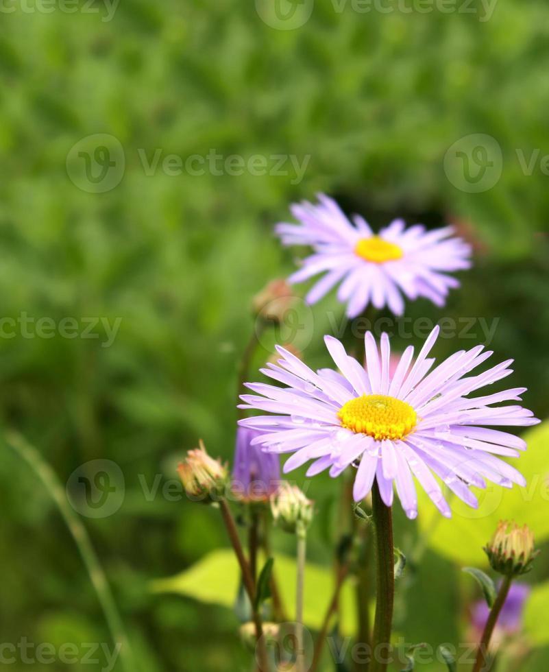 Flores de primavera foto