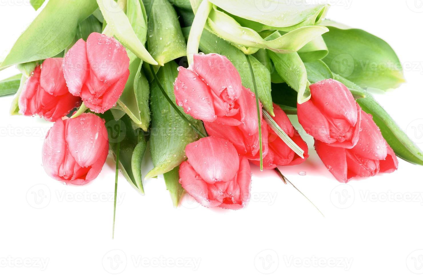 tulipanes de primavera foto