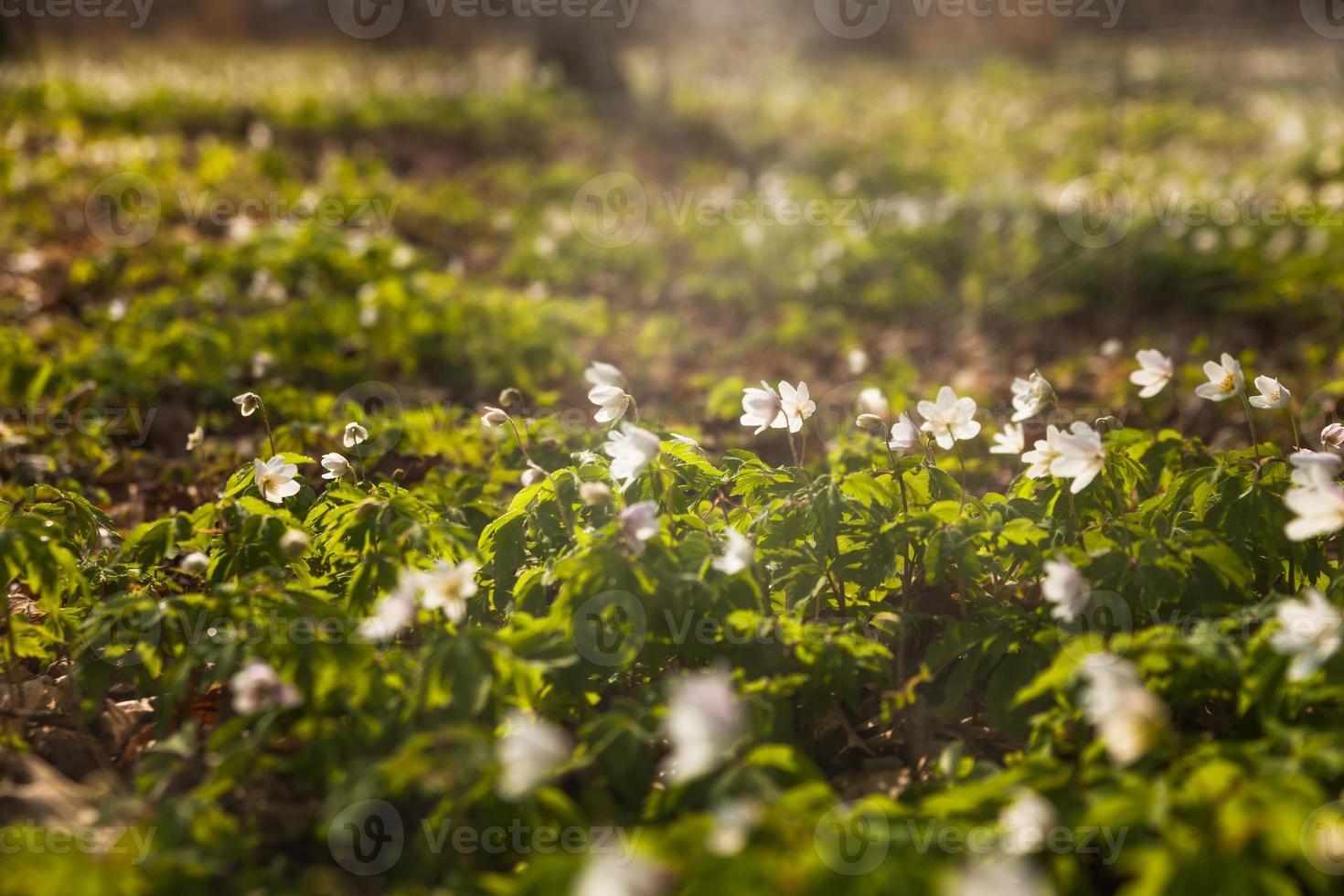 spring flowers photo