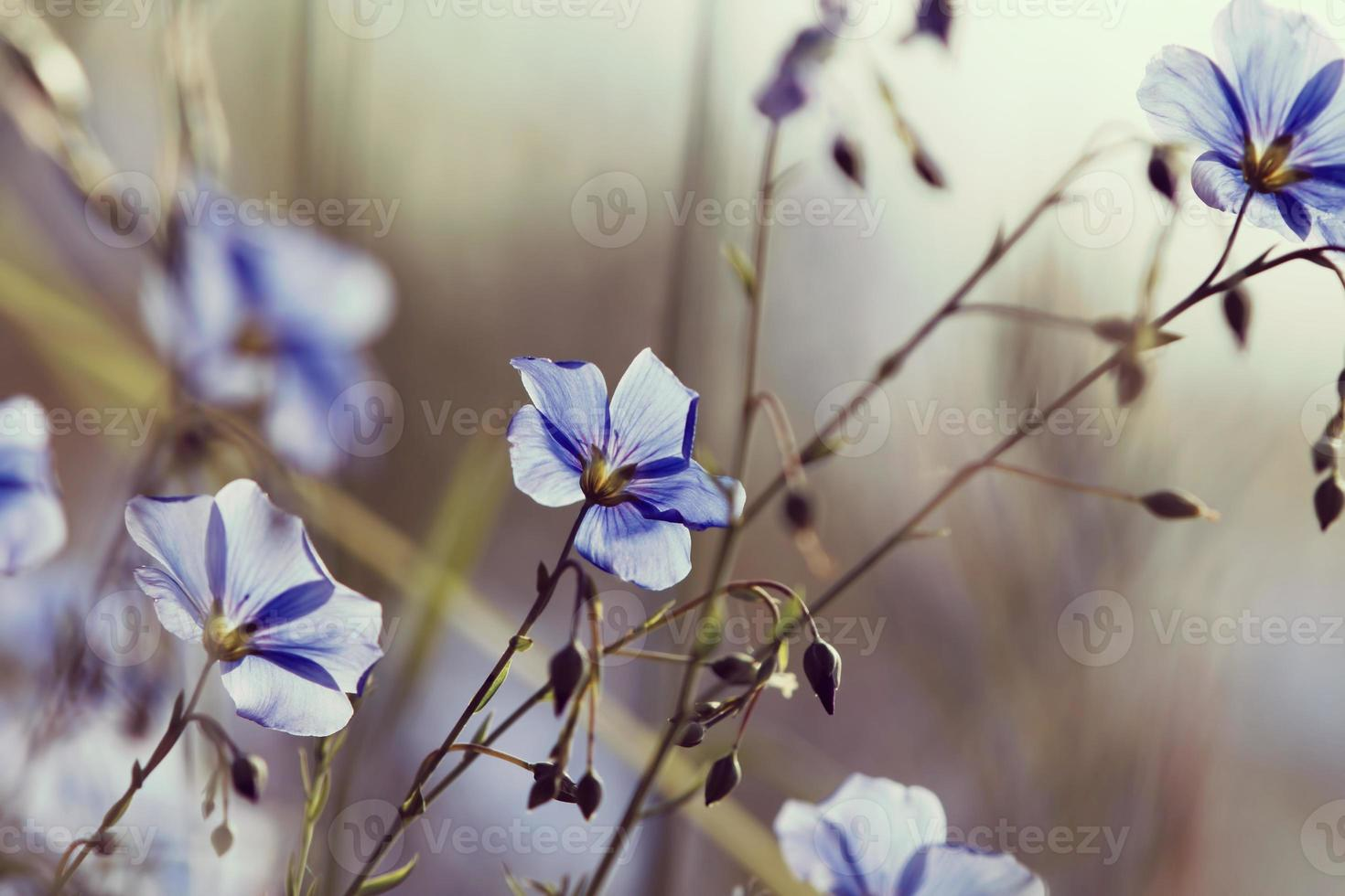 Flowers, spring photo