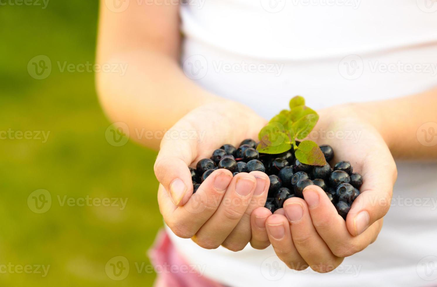 Hands holding fresh blueberries photo