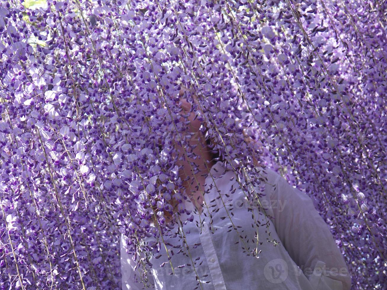 niña en flores de glicina foto
