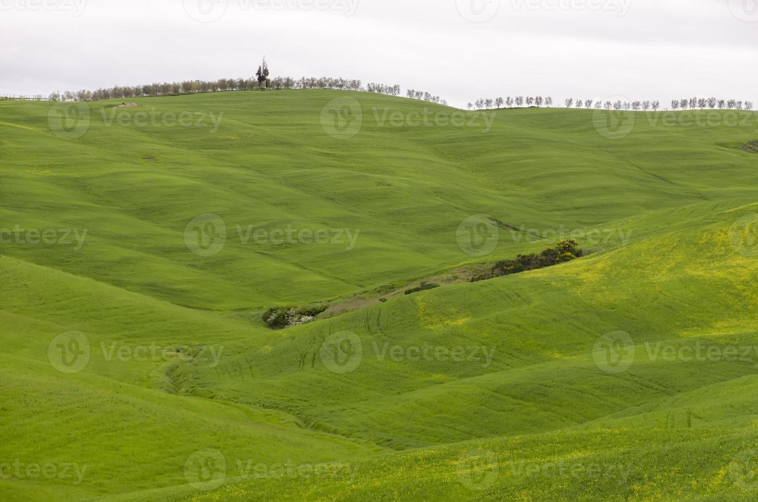 Tuscan landscape photo