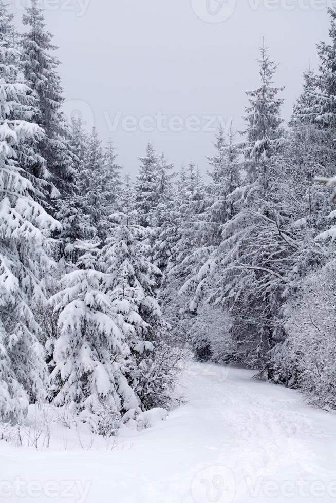 Snow covered winter landscape photo