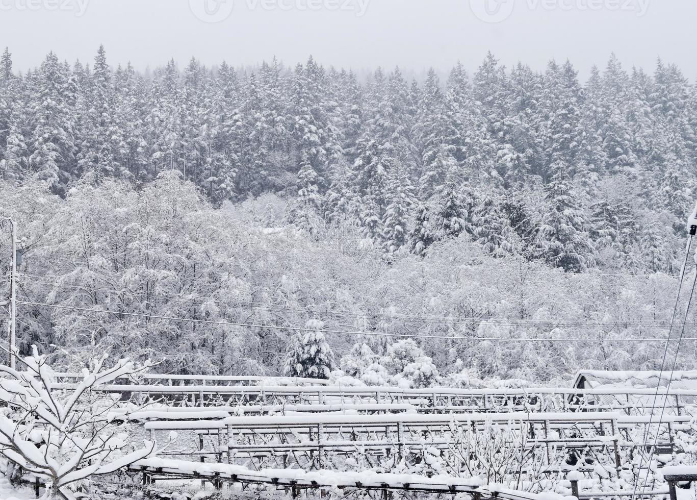 Winter fences photo