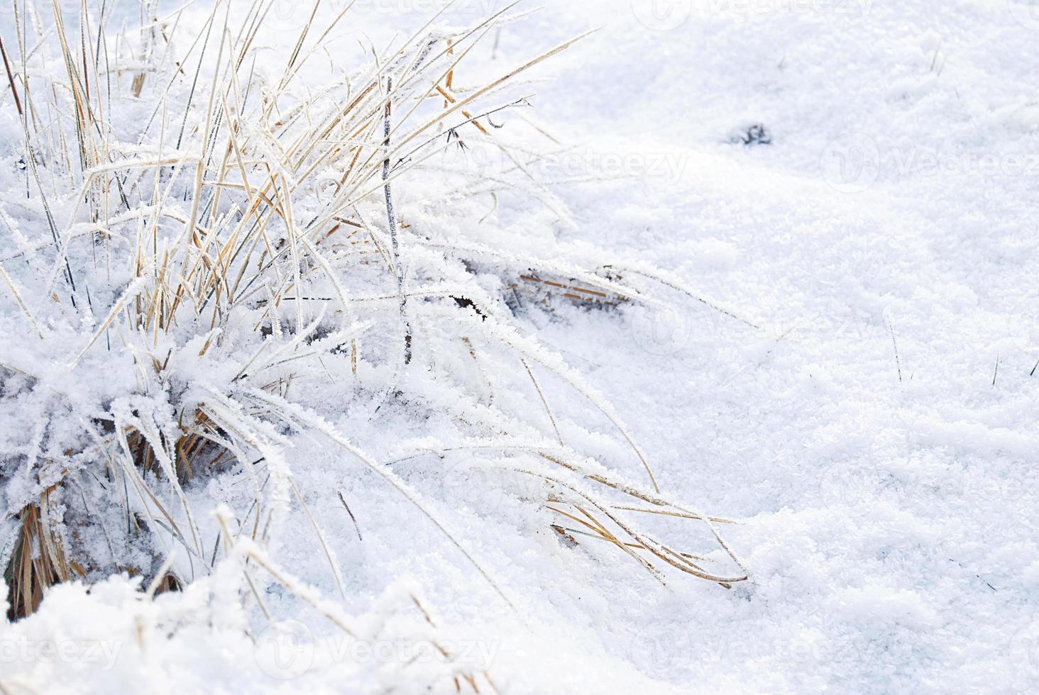 heladas de invierno foto