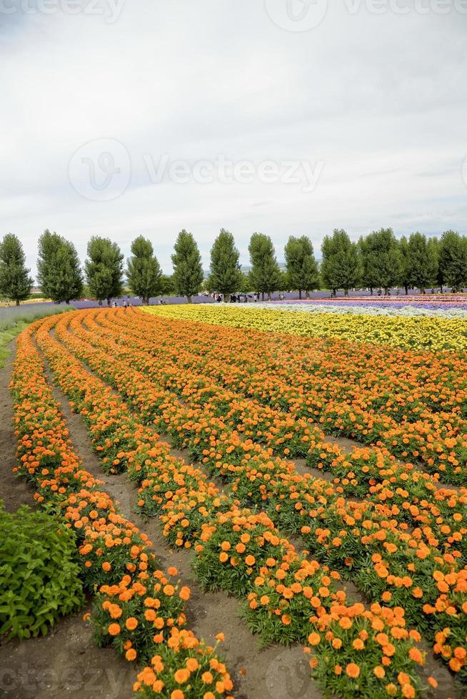 fila de flor de naranja en farm1 foto