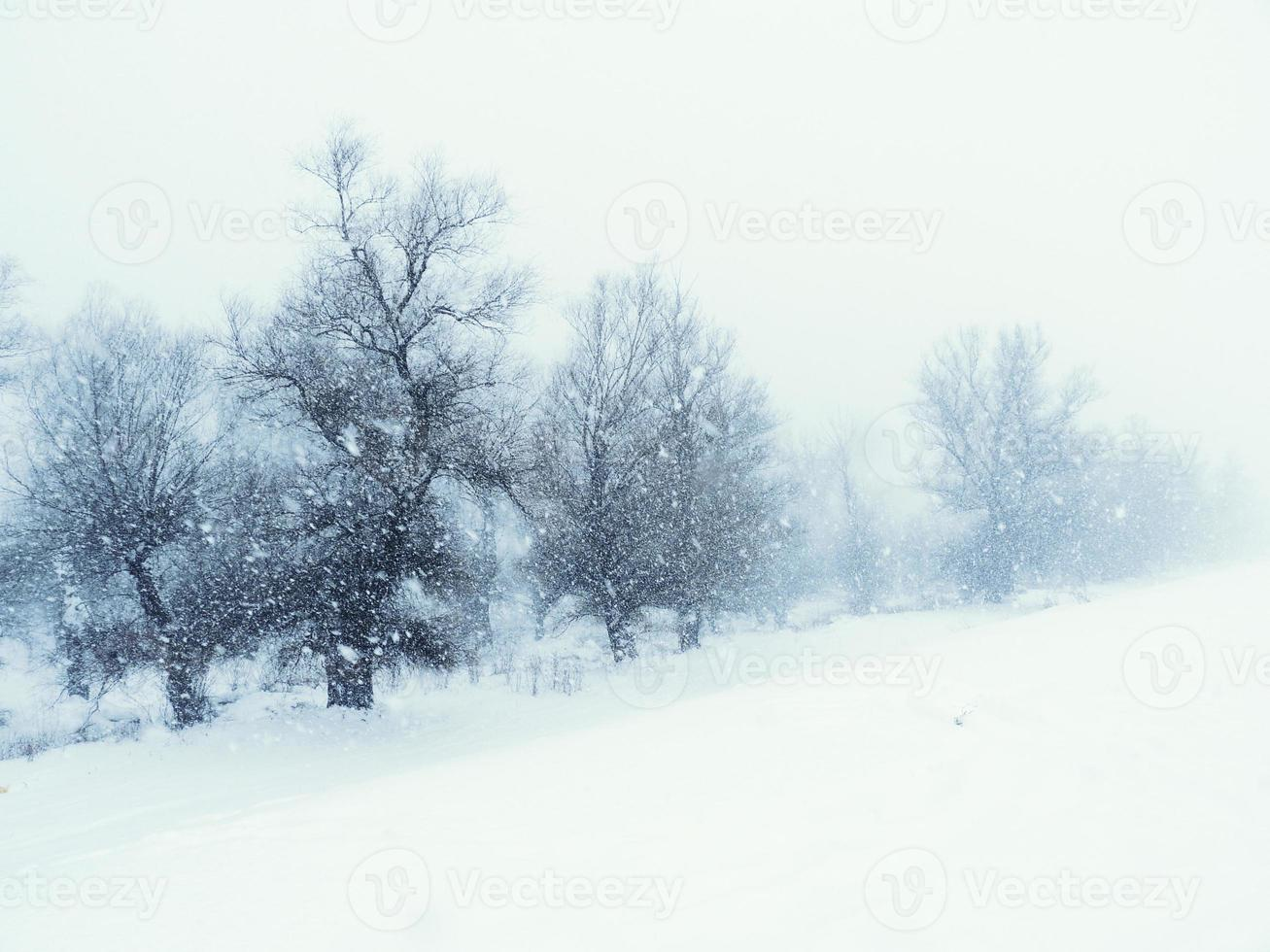 Winter time photo