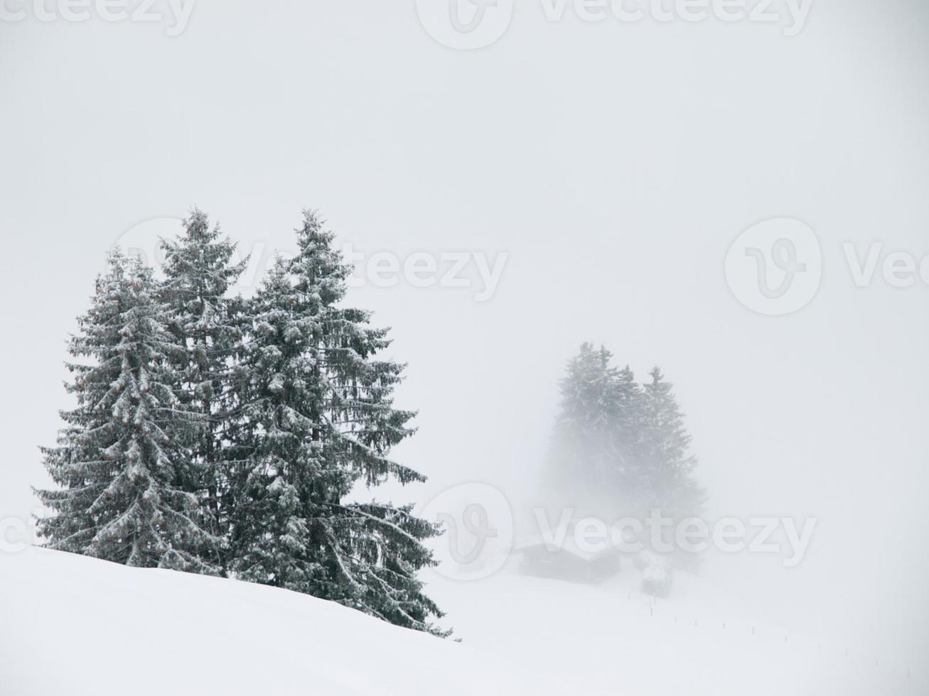 bosque de invierno brumoso foto