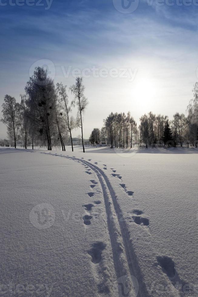 árboles en invierno foto