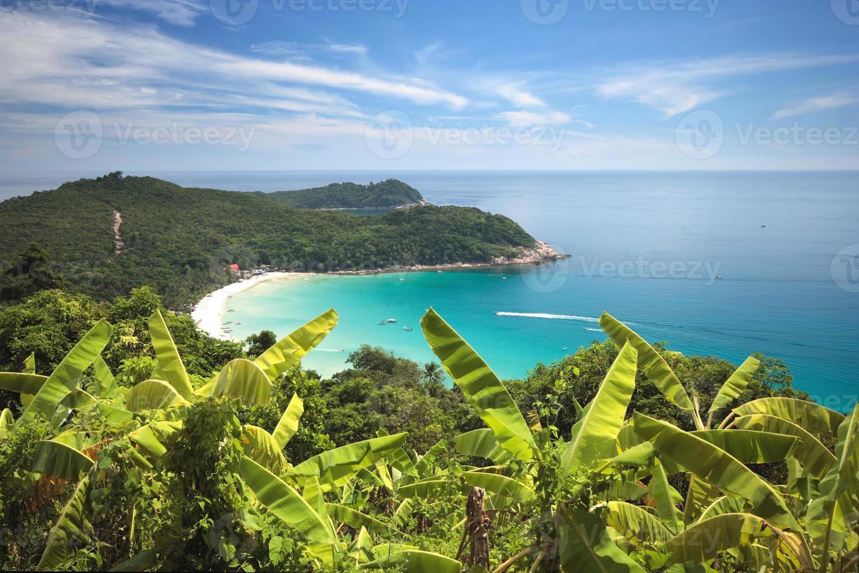 Campo de planta de banano en una colina de una isla tropical foto