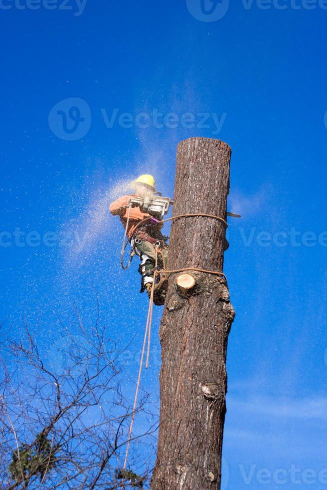 leñador trepando el tronco de un árbol foto