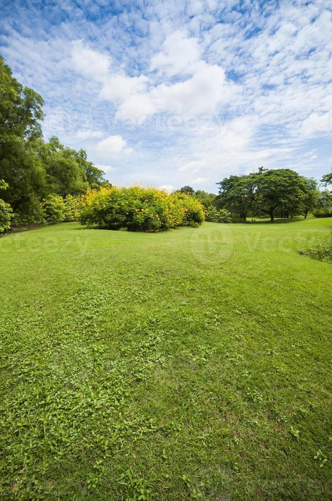 Green summer park garden. photo
