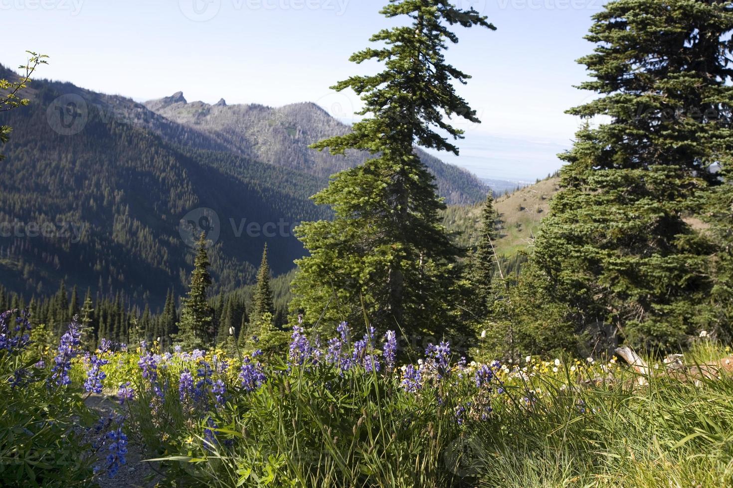 flores silvestres en las montañas foto