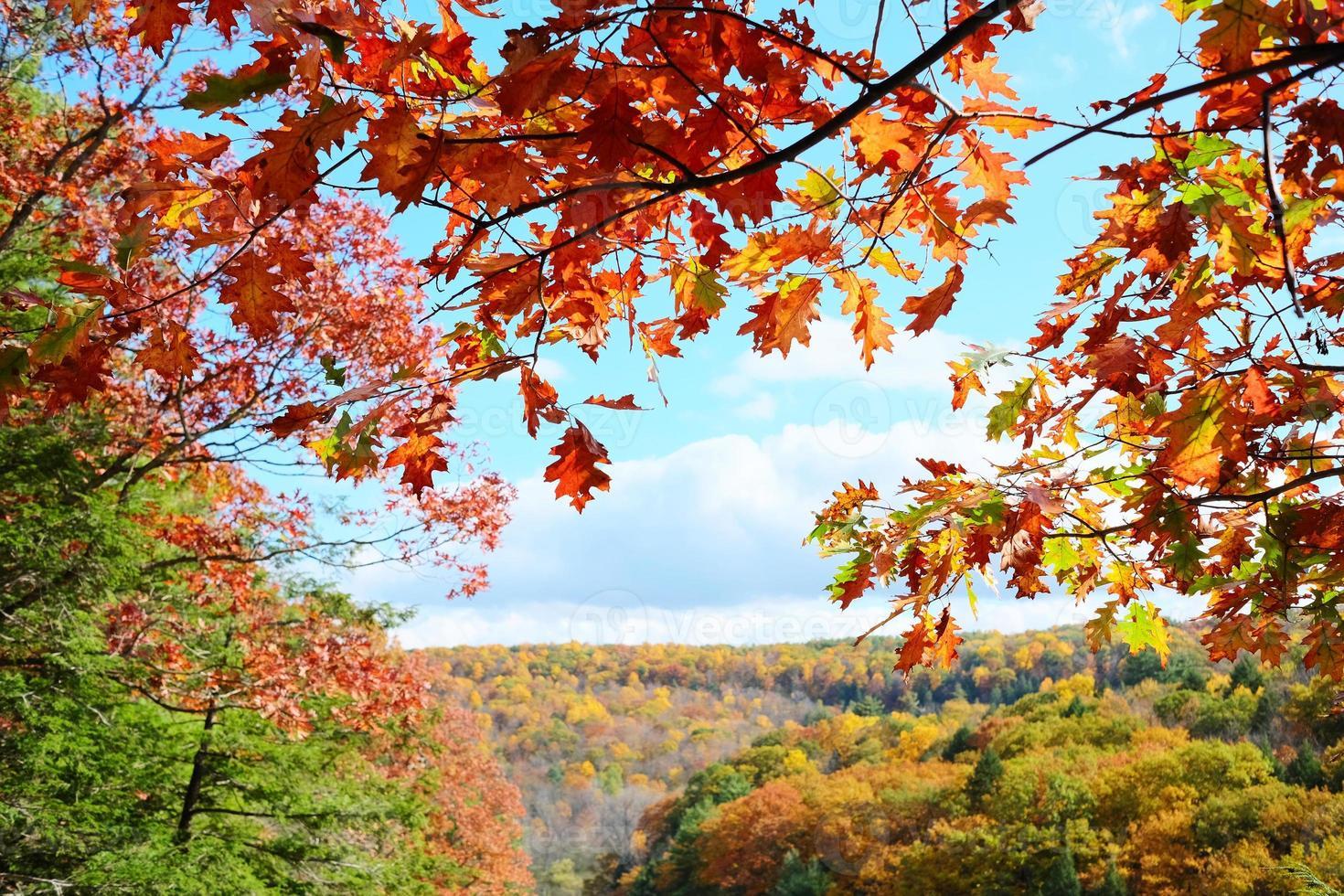 Autumn scene photo