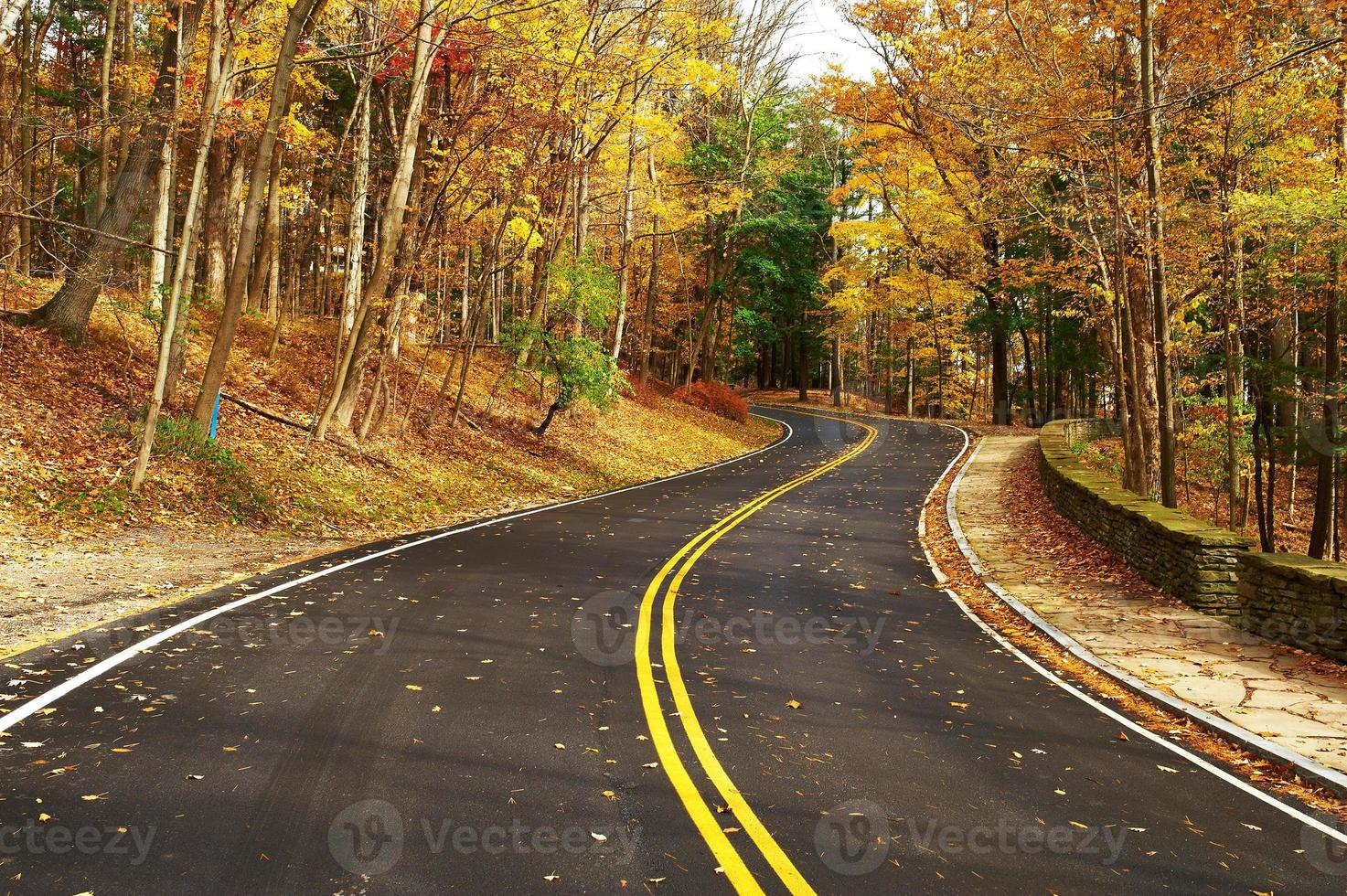 Autumn scene with road in forest photo