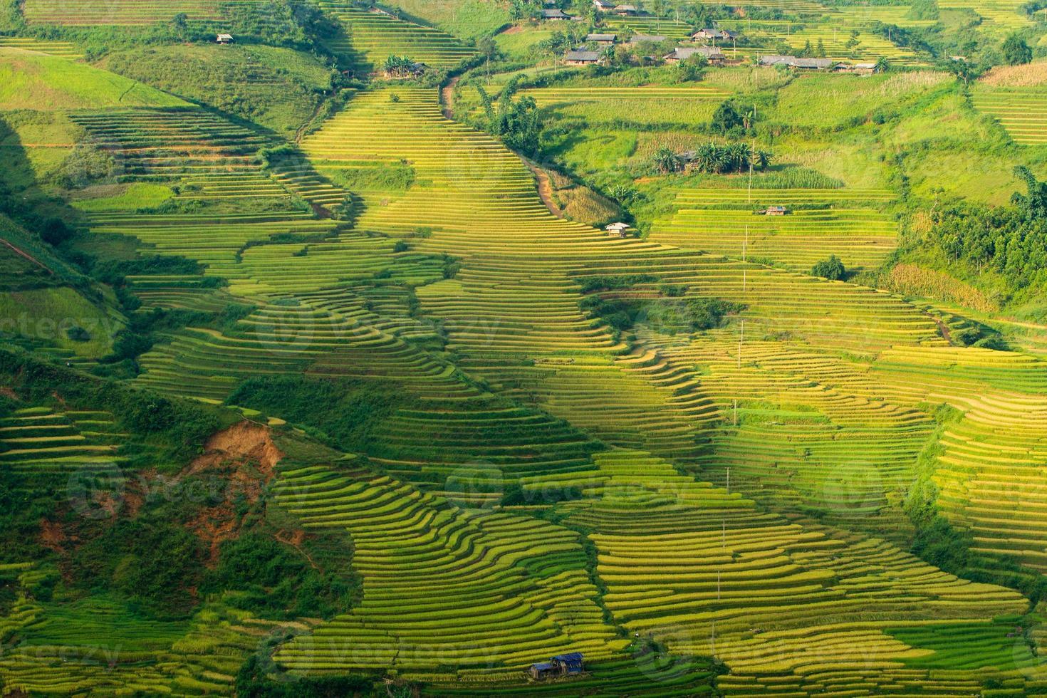 terrazas de arroz en vietnam foto