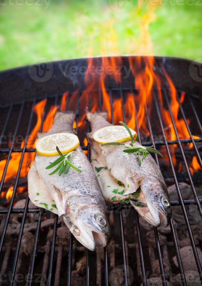 Grilled trouts photo
