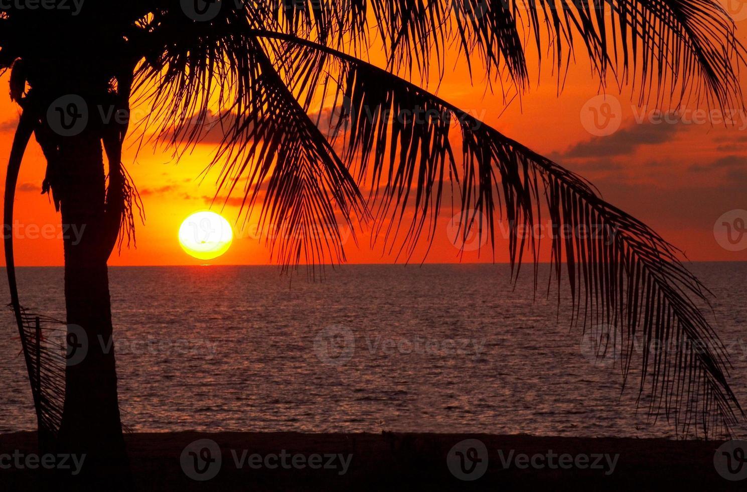 puesta de sol y palmeras foto