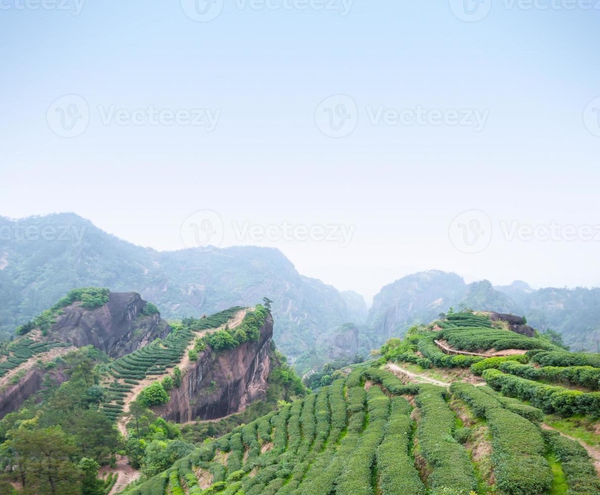 Tea plantation in Wuyi Mountains photo