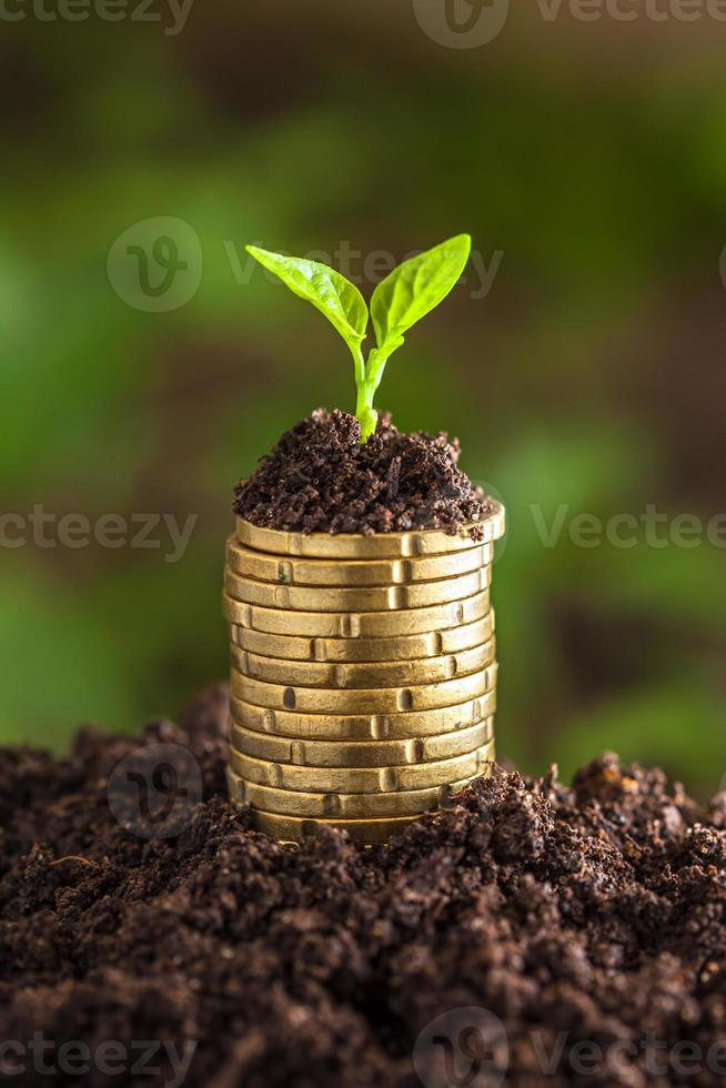 Golden coins in soil with young plant. photo