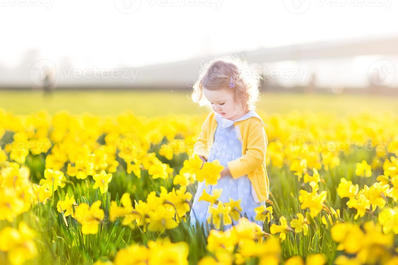 Niña pequeña que recoge las flores amarillas del narciso en la tarde soleada del verano foto