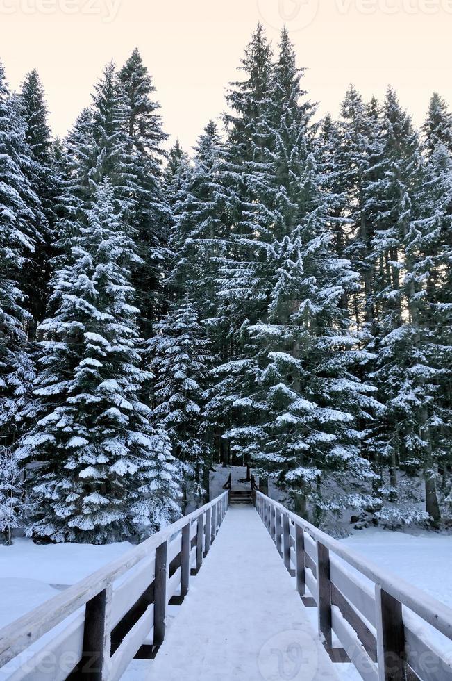 cruzar en bosque de invierno foto