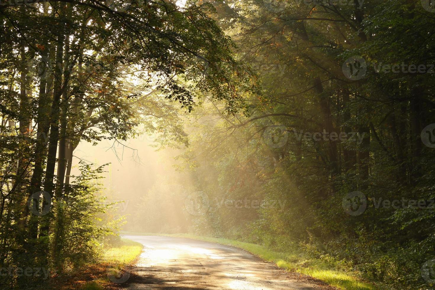 Misty autumn morning in the woods photo