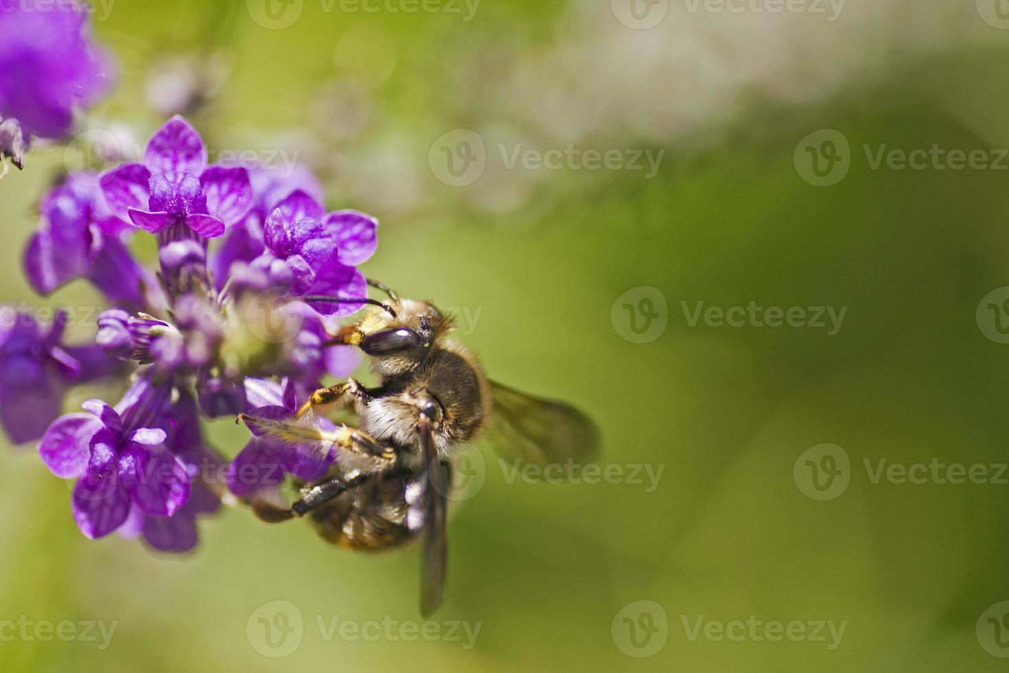flores de jardin foto