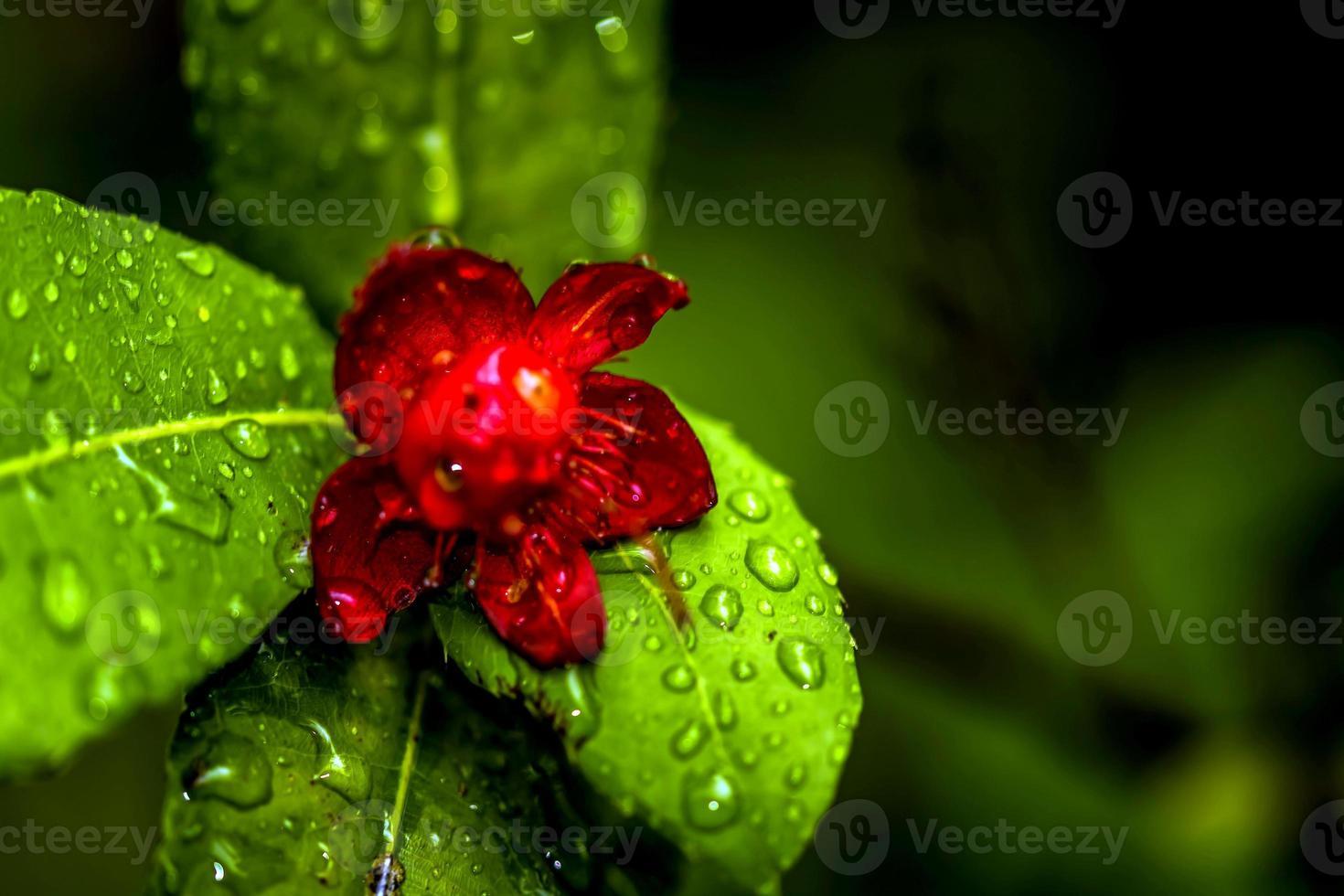 Flores tropicales foto