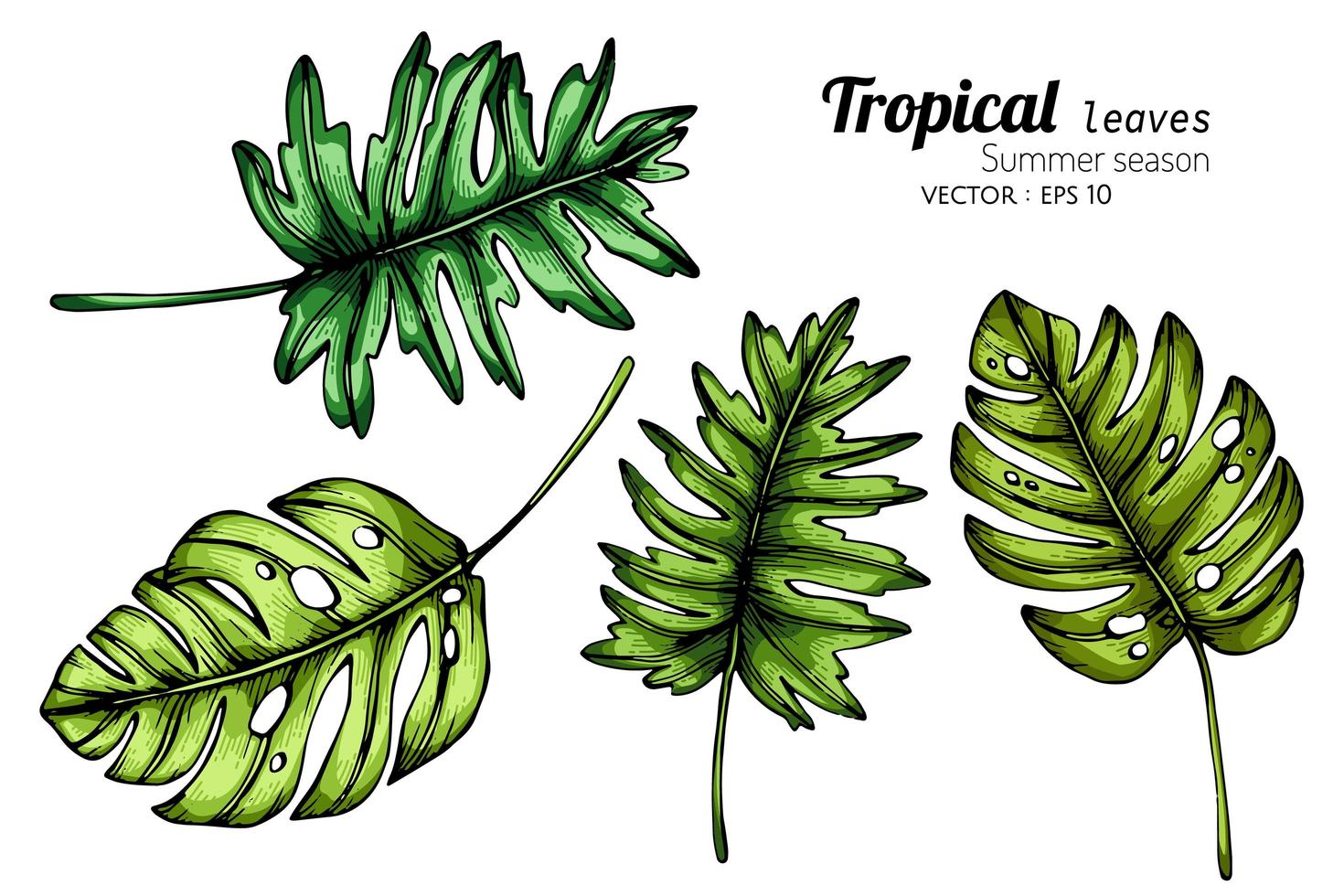 Set Of Large Tropical Leaves Download Free Vectors Clipart Graphics Vector Art ✓ free for commercial use ✓ high quality images. set of large tropical leaves download