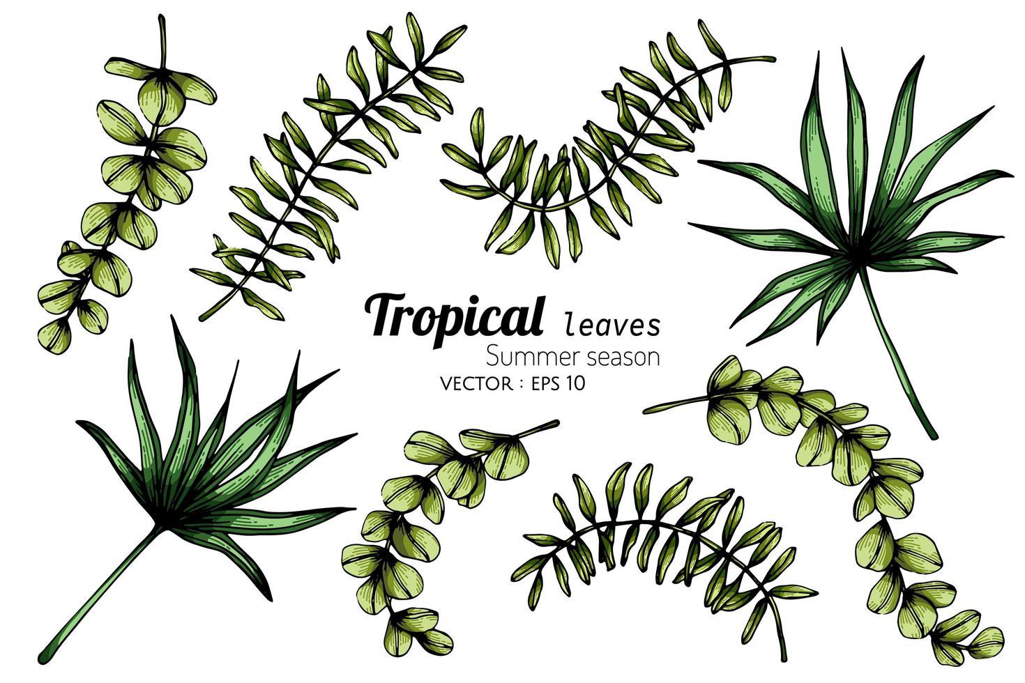 insieme di vari tipi di foglie tropicali vettore