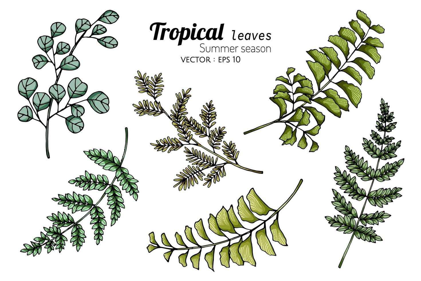 insieme di varie foglie tropicali in più colori vettore