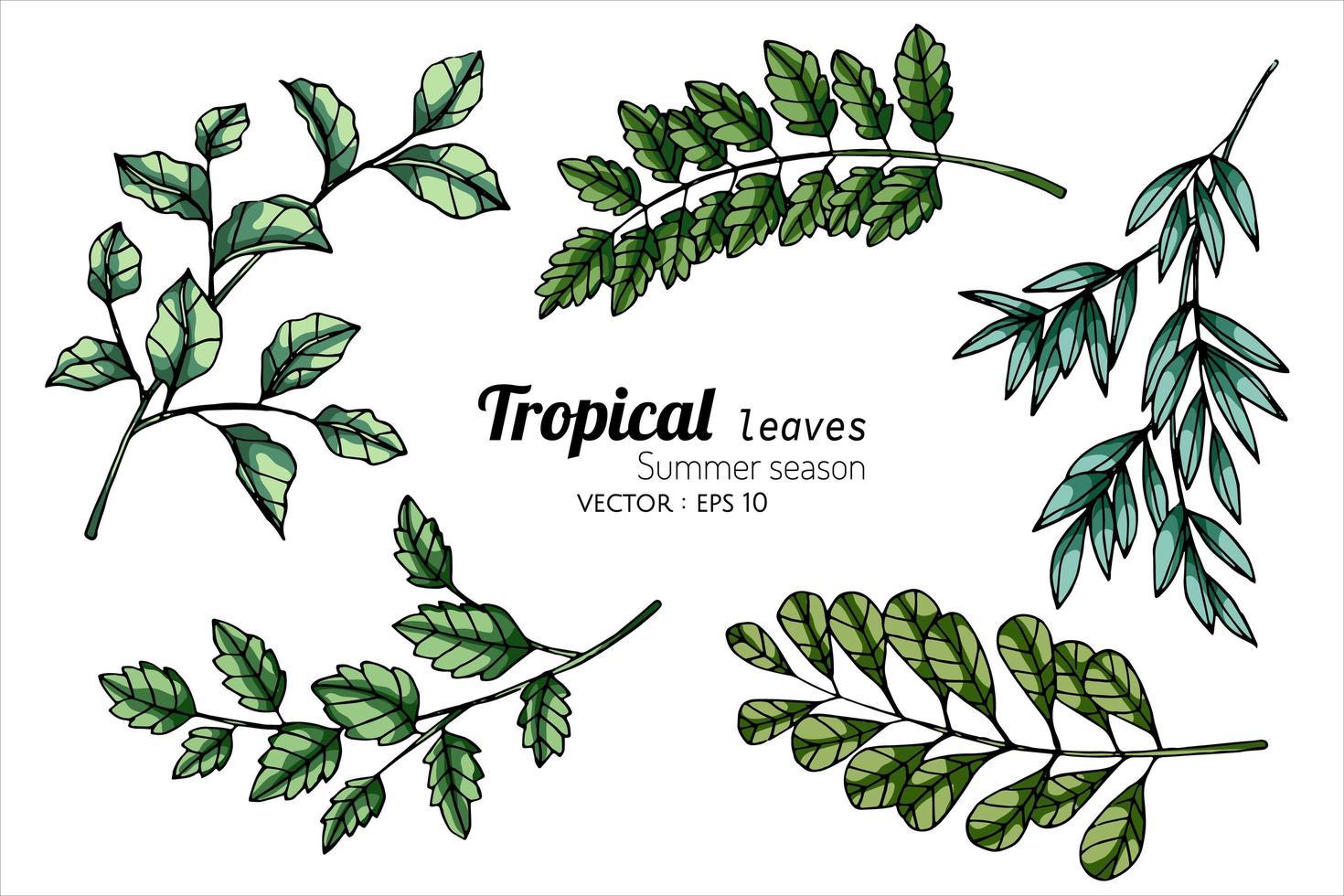 hoja tropical en diferentes tonos de verde vector