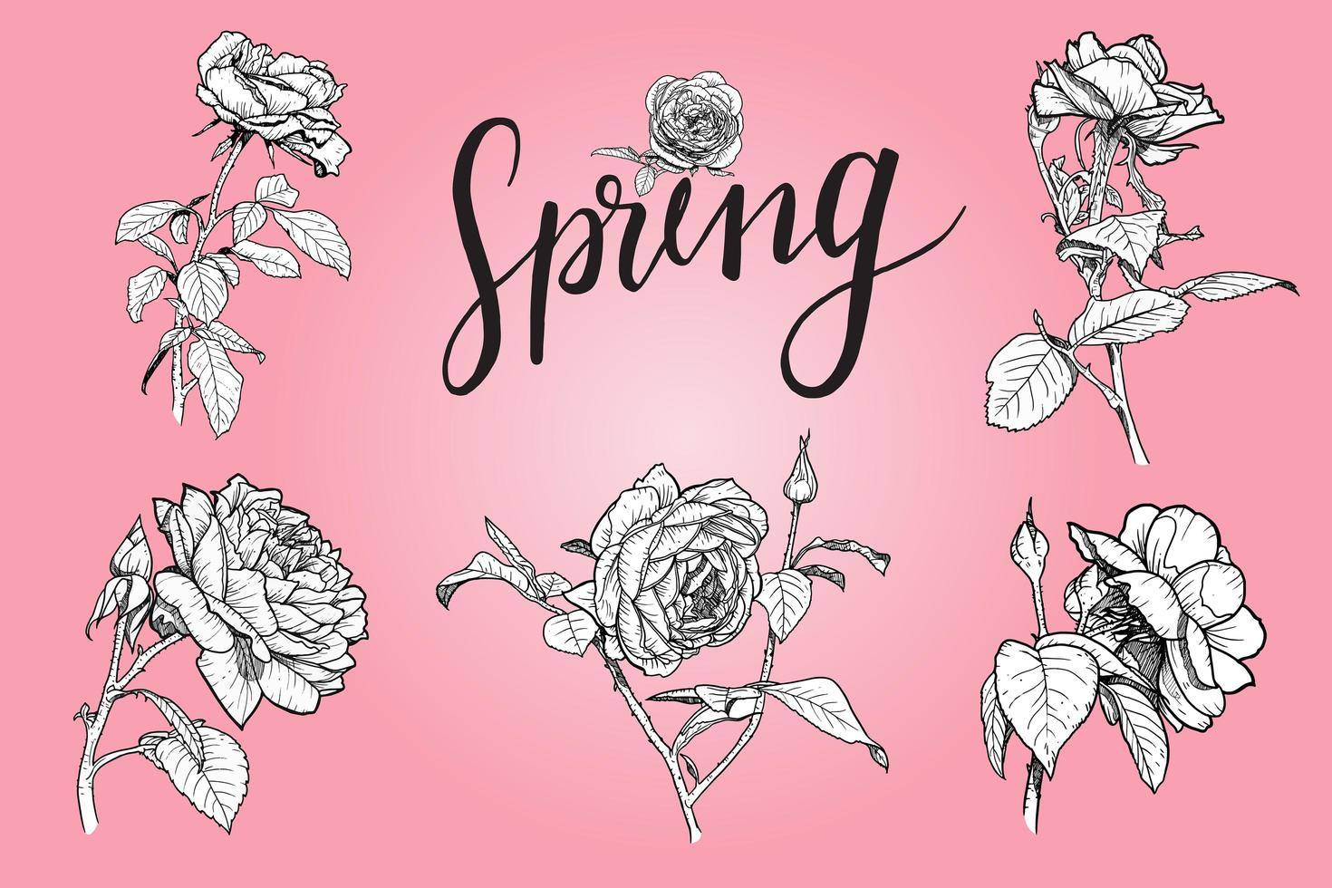 Set of rose flower skteches on pink vector
