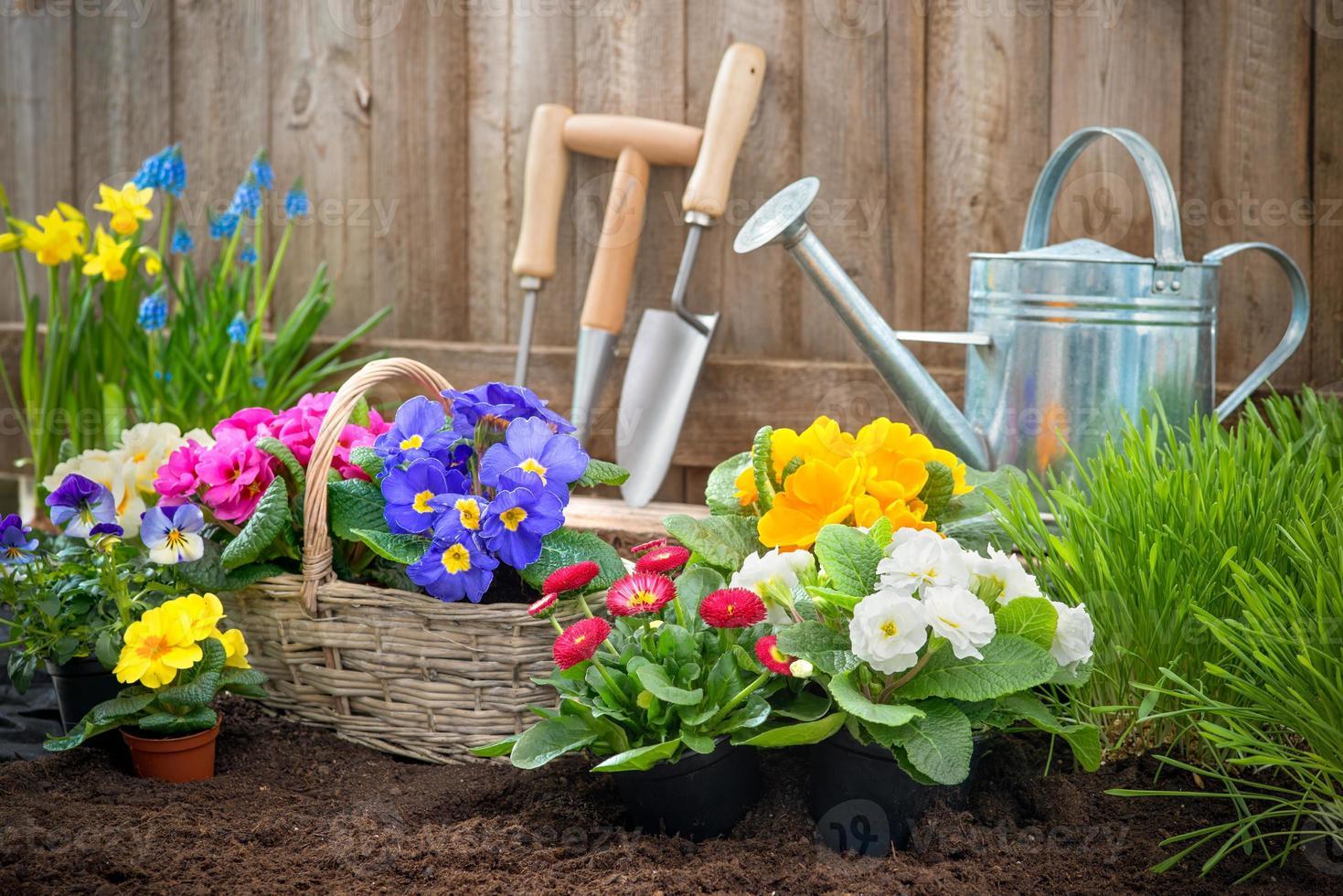 Gardener planting flowers photo