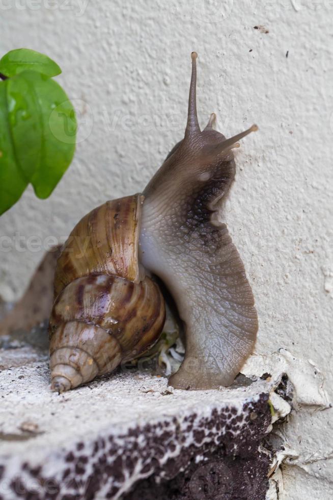 close up snail photo