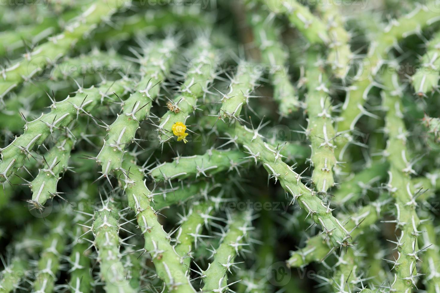 Cactus close-up photo