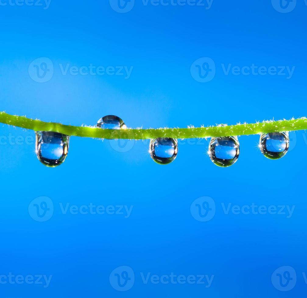 Dew drops close up photo