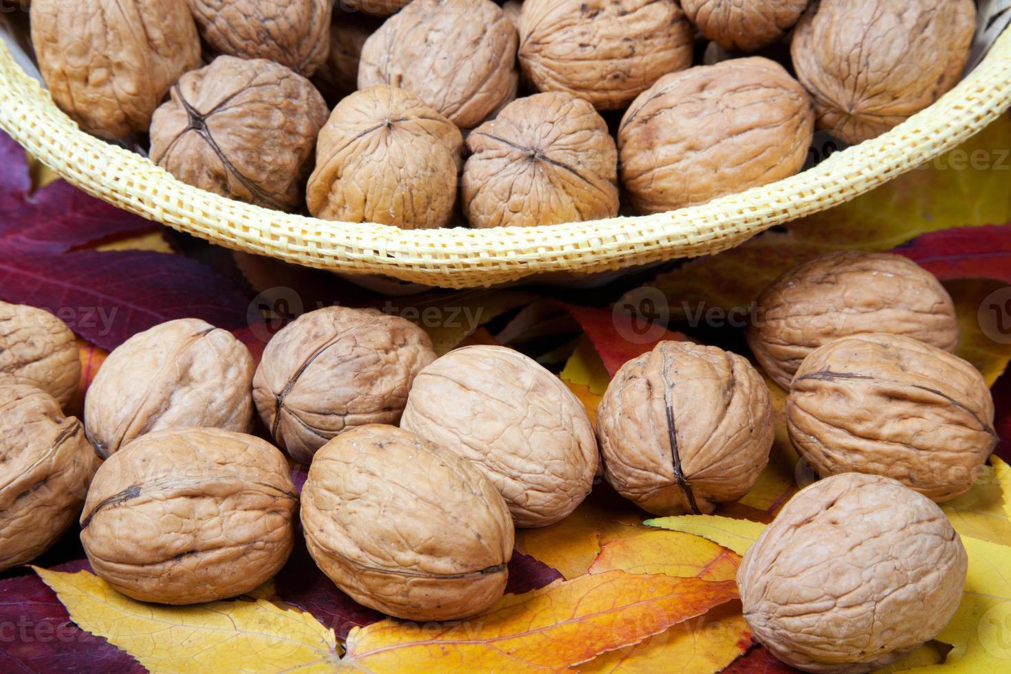 Walnuts close-up photo
