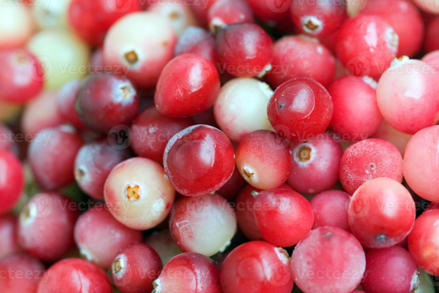 Cranberry close-up photo