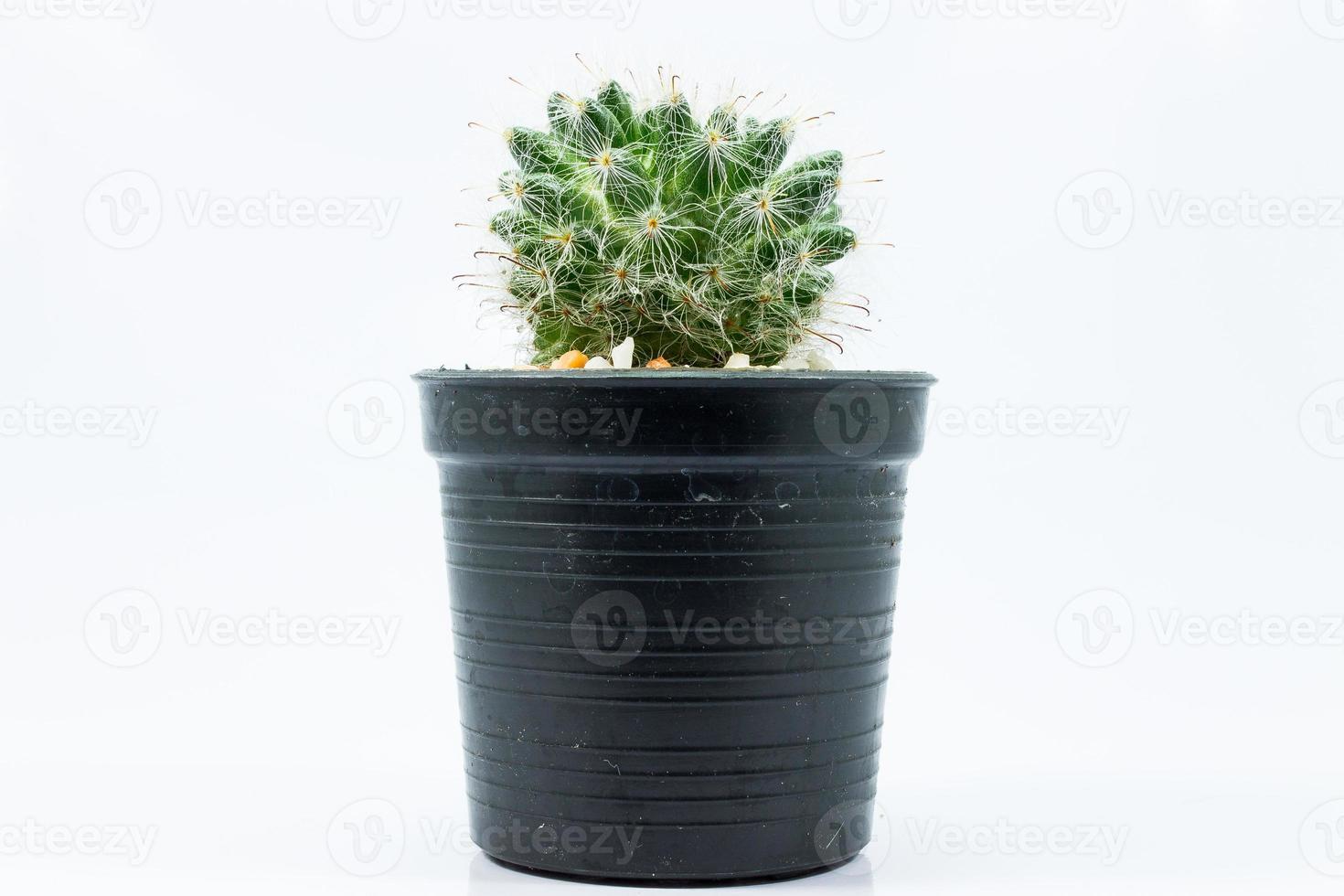 Close up cactus photo