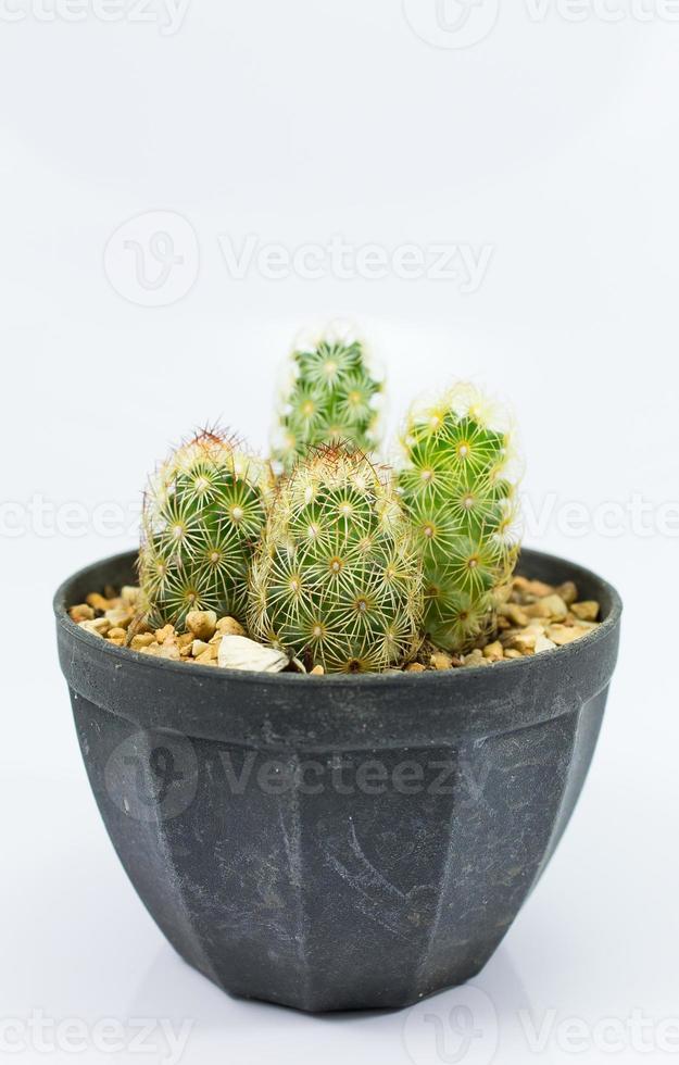 cerrar cactus foto