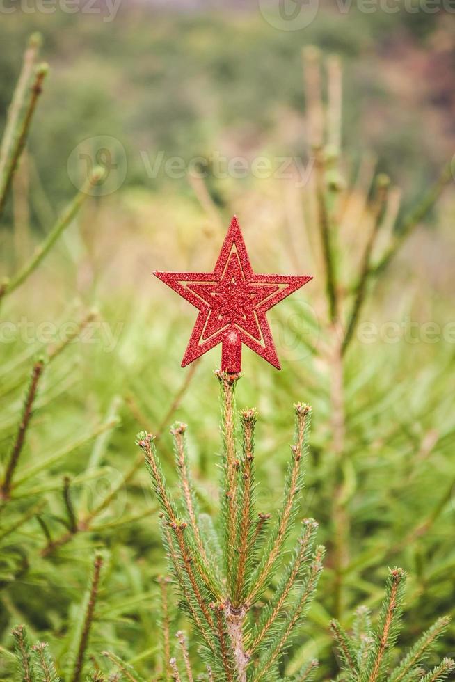 estrella roja brillante en un abeto al aire libre para Navidad foto