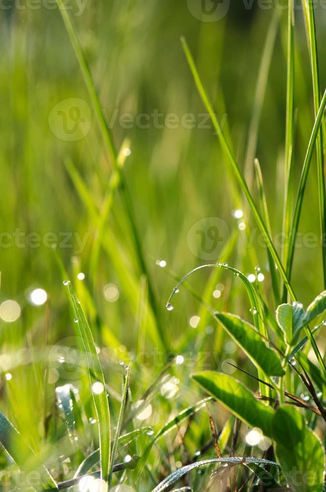 rocío de la mañana en una brizna de hierba foto