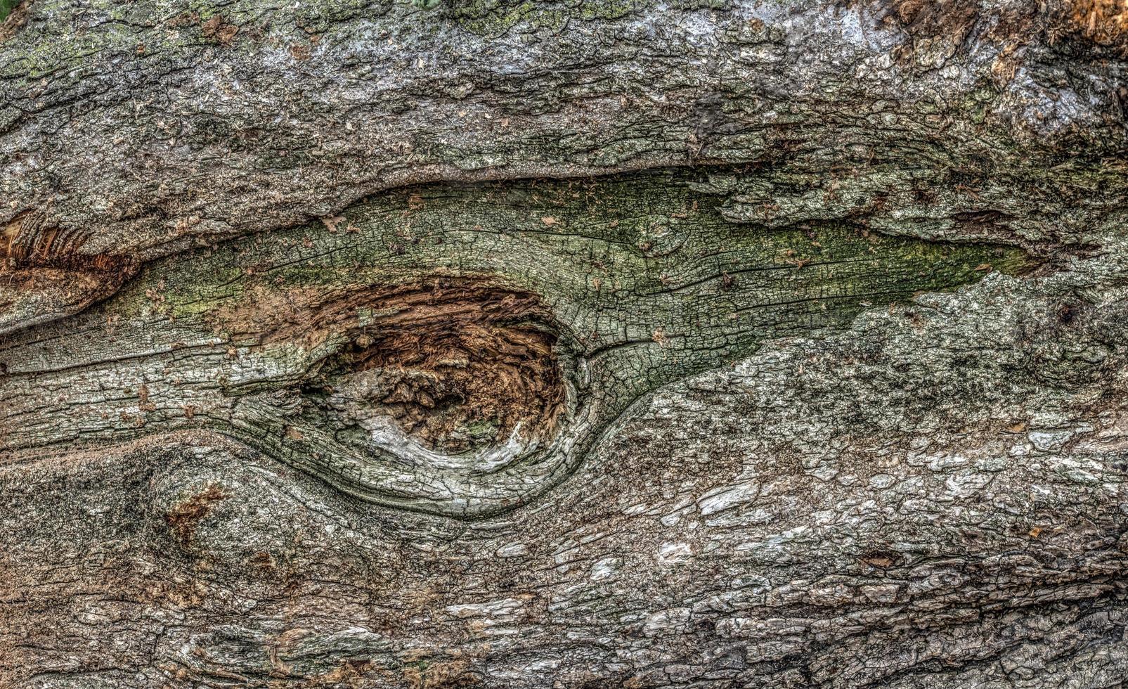 Close up of log photo