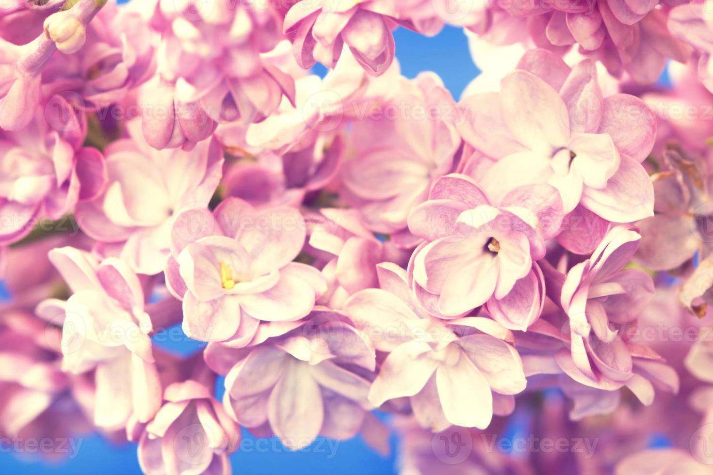 rama lila de cerca foto