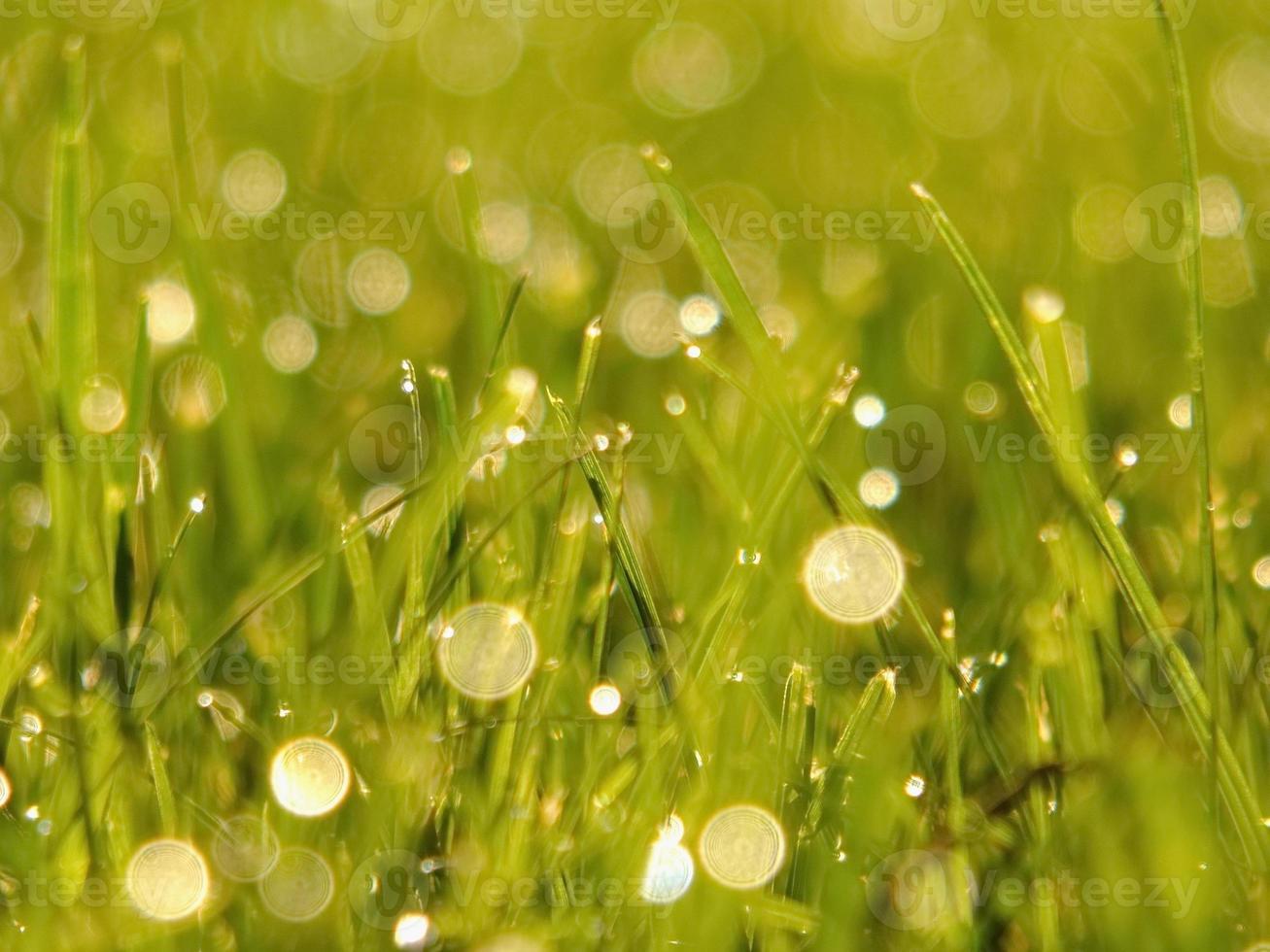 hierba verde fresca foto