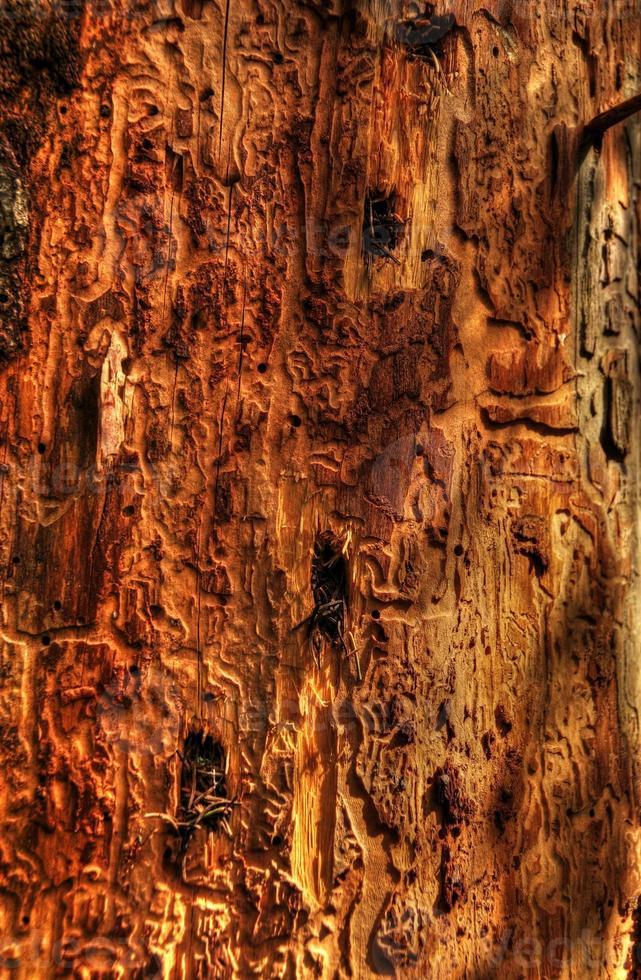 ill tree close-up photo