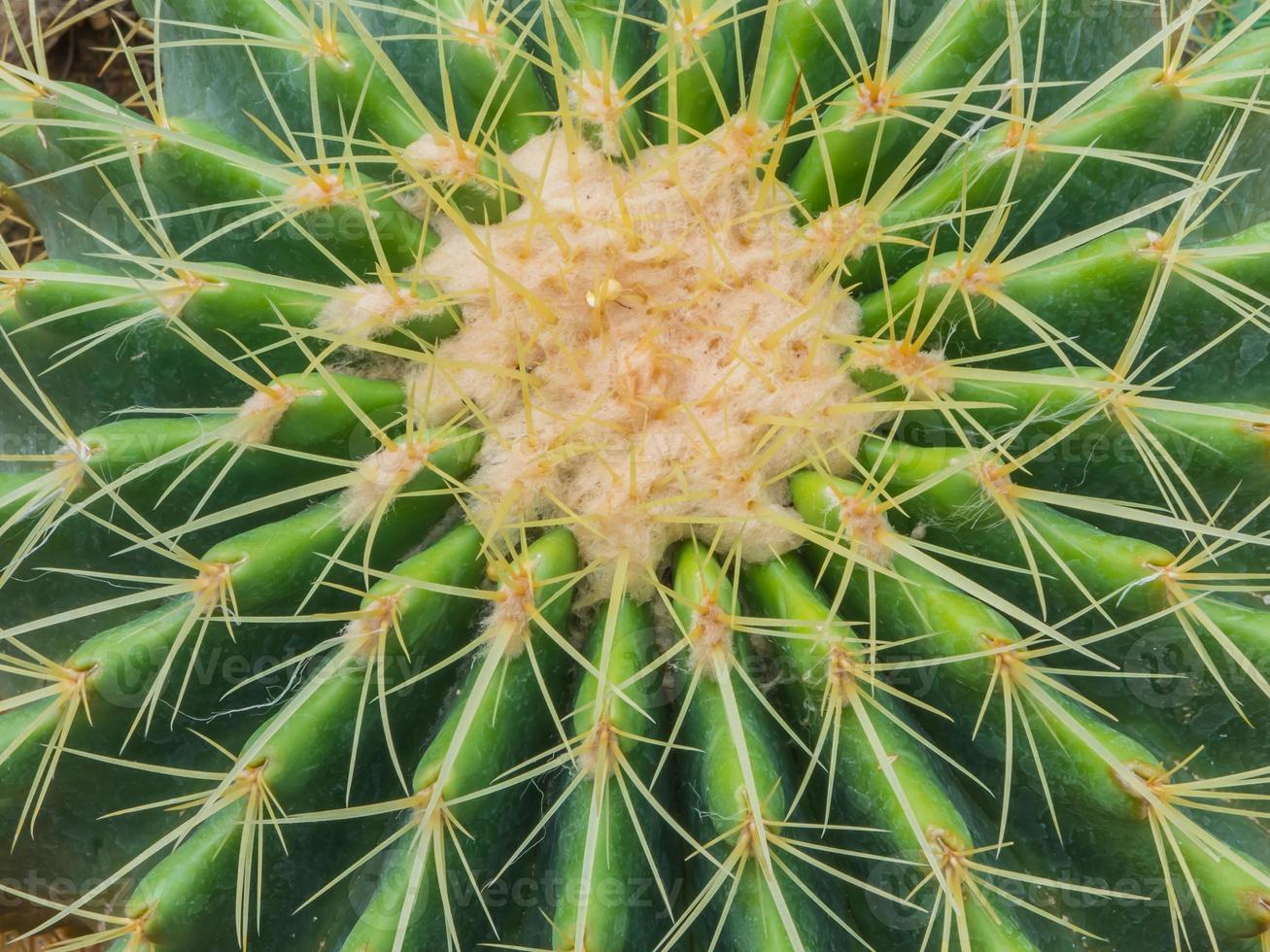 Close up of cactus photo